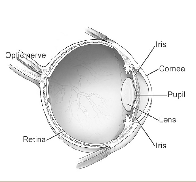 Human_eye_diagram-sagittal_view-NEI