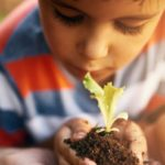 Child looking closely at a budding plant.